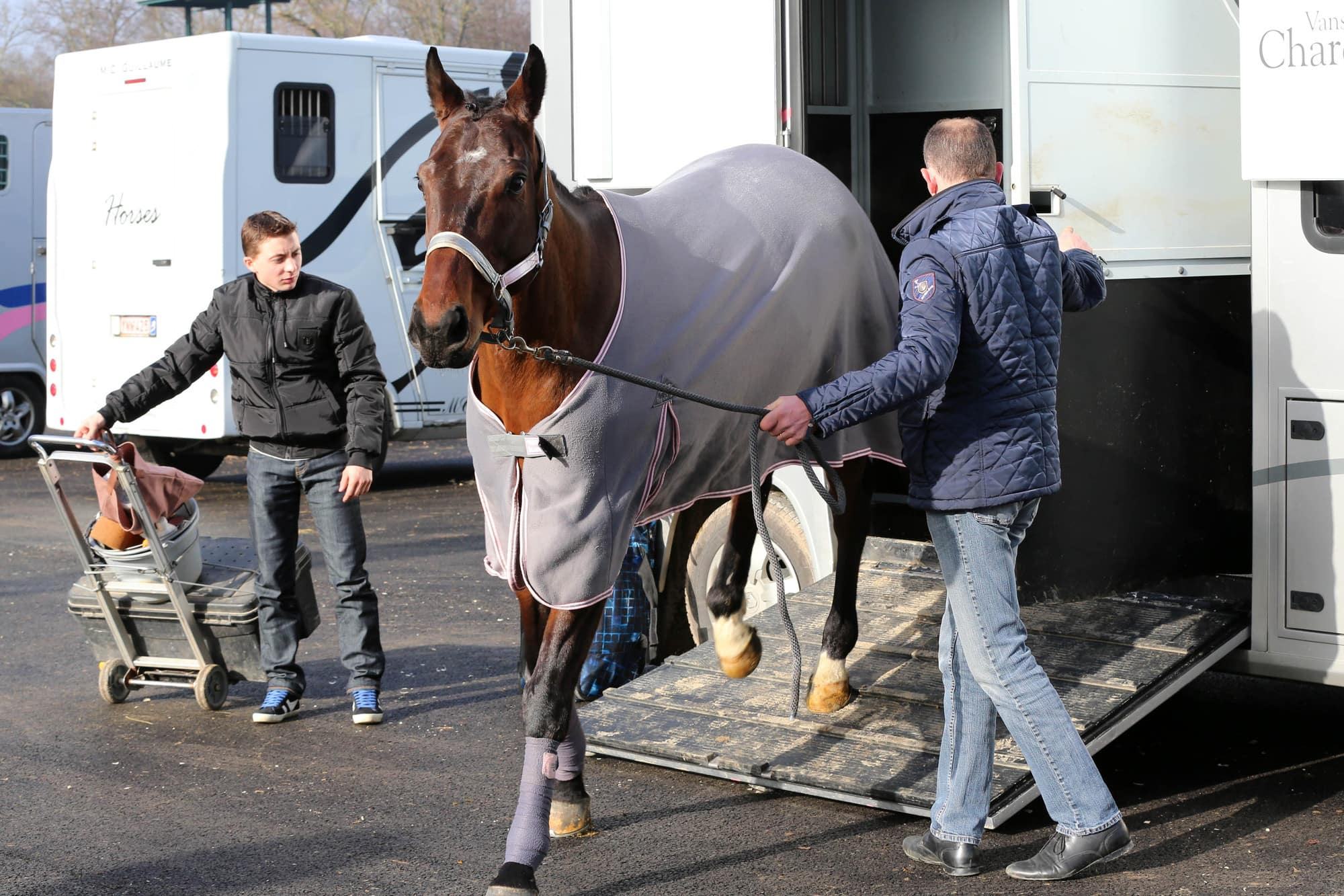 transport chevaux