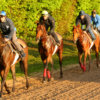 Chantilly - 05/05/2015 - Entrainement