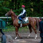 Formations cheval en apprentissage École des Courses Hippiques