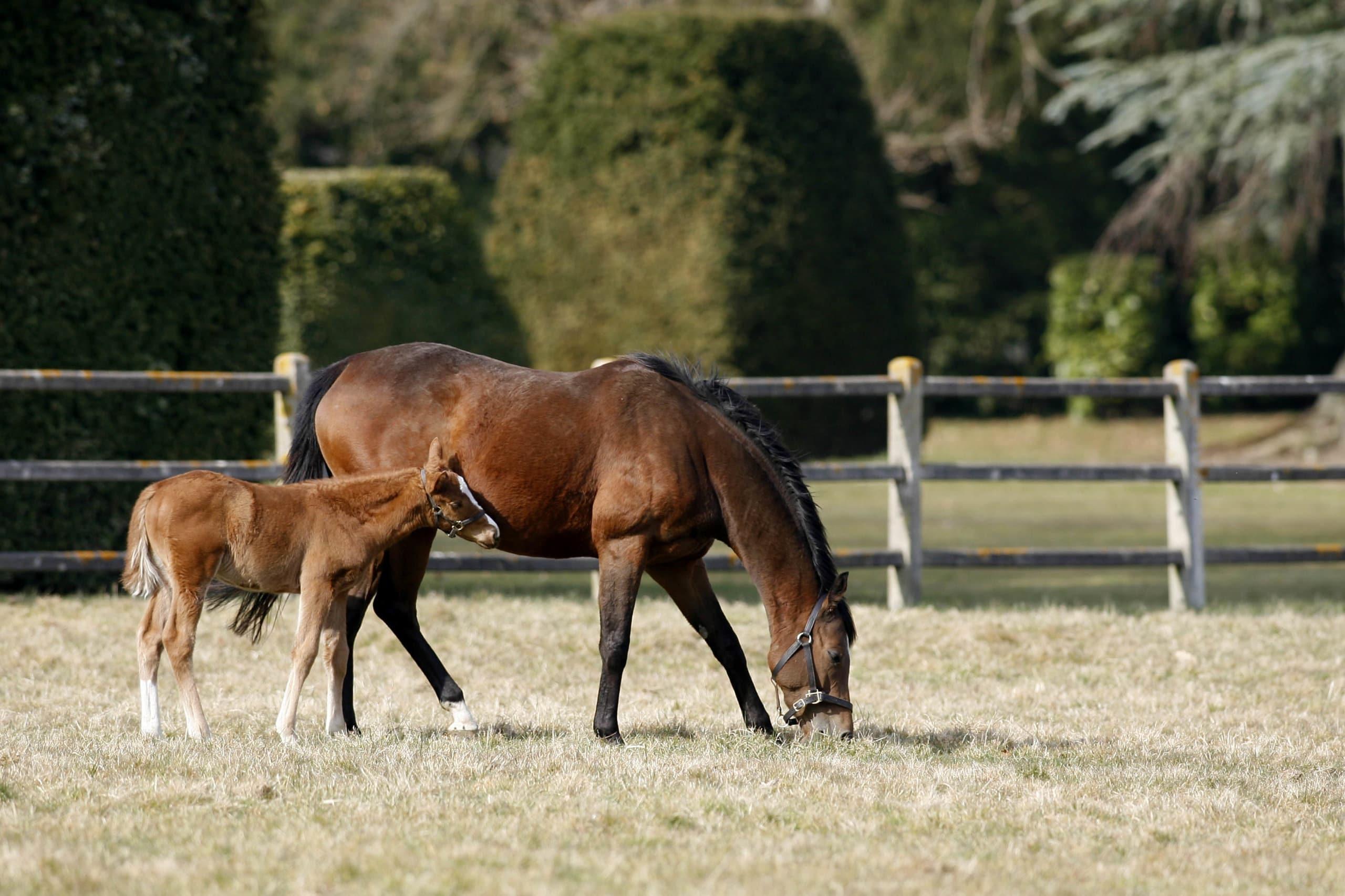 Conditions de vie des chevaux