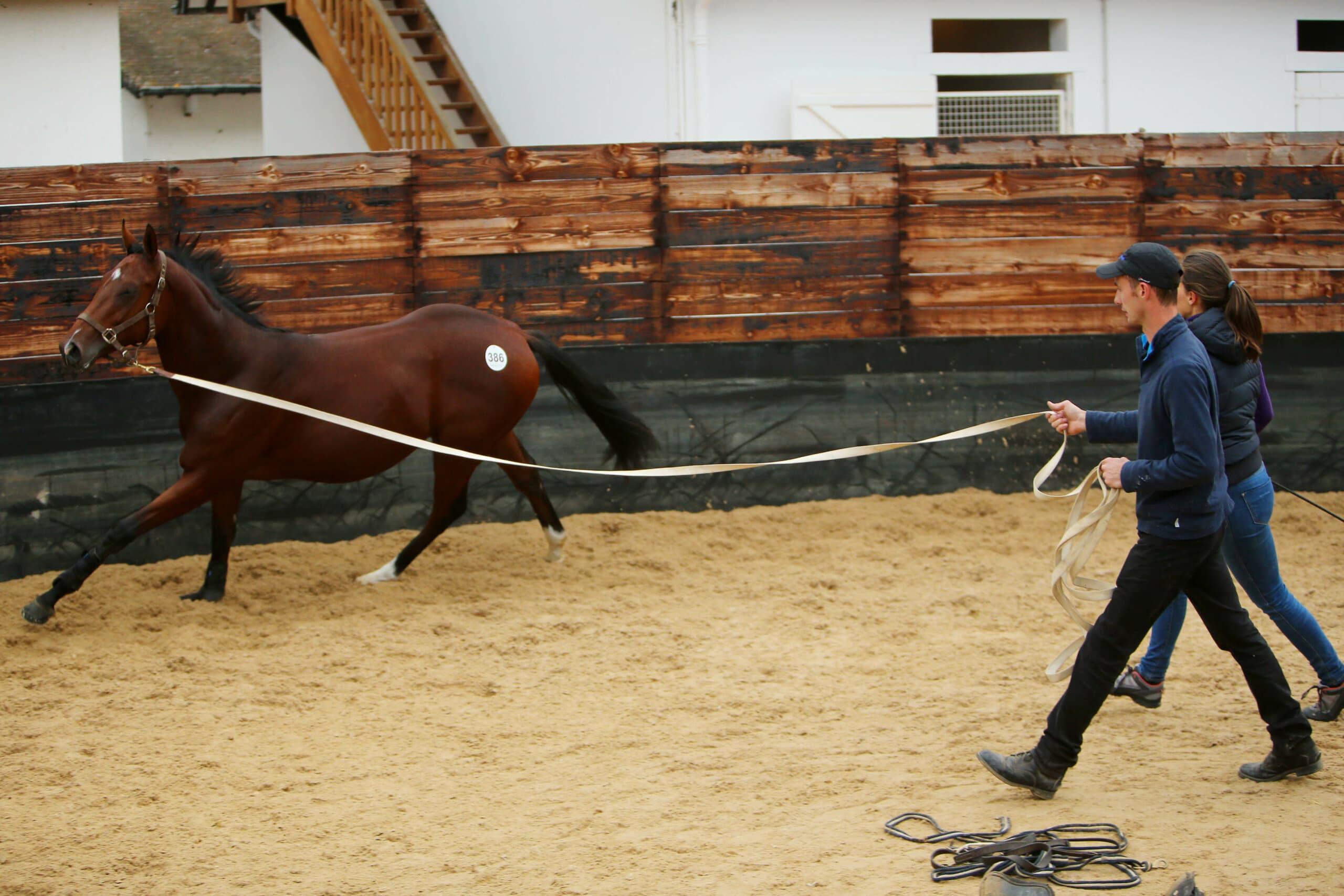 Éducation et réeducation du cheval